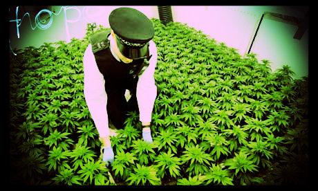Fakty o medycznej marihuanie w Kanadzie, KonopiaLeczy.com