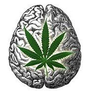 Medyczne zastosowanie marihuany, KonopiaLeczy.com