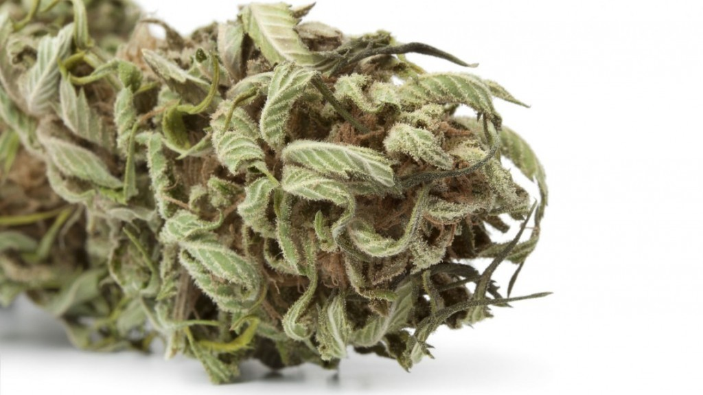 Izrael: Marihuana daje nadzieję rodzicom dziecka z uszkodzonym mózgiem, KonopiaLeczy.com