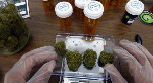 medyczna-marihuana-na-wadze-wazona-marihuana