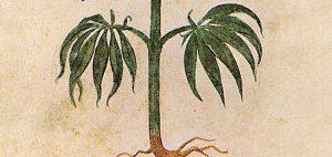 Objawy uzależnienia towarzyszące stosowaniu marihuany, KonopiaLeczy.com