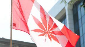 kanada-palenie-marihuany-w-kanadzie-usa-thc-usa-thc