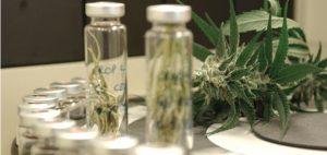Lek wykonany z marihuany może leczyć schizofrenię, KonopiaLeczy.com