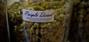 Marihuana łagodzi ból u osób opornych na leczenie, KonopiaLeczy.com