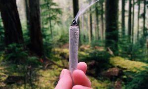 Czy marihuana uzależnia?, KonopiaLeczy.com