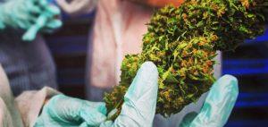 Inhalowanie cannabis łagodzi objawy choroby Parkinsona, KonopiaLeczy.com