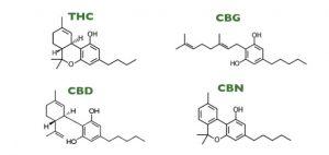 Kannabinoidy mogą leczyć symptomy neuropatyczne, KonopiaLeczy.com