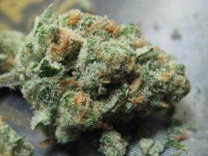 Stosunek THC:CBD, KonopiaLeczy.com