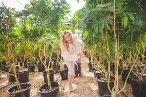 Konopia – co to jest i czym różni się od marihuany, KonopiaLeczy.com