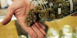 Czy przedawkowanie marihuany jest możliwe?, KonopiaLeczy.com
