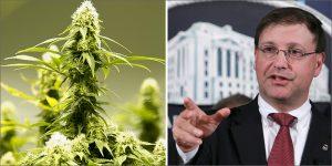 """Szef DEA właśnie stwierdził, że """"Marihuana nie jest lekarstwem"""", KonopiaLeczy.com"""