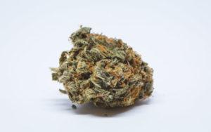 Meksyk oficjalnie legalizuje medyczną marihuanę, KonopiaLeczy.com