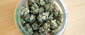 Idealne warunki do przechowywania marihuany, KonopiaLeczy.com