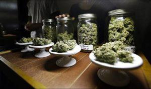 Marihuana jest bezpieczniejsza niż alkohol, KonopiaLeczy.com