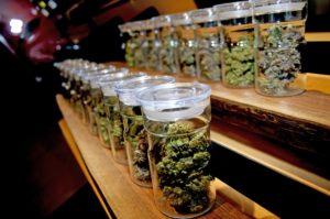 W Michigan, apteki z cannabis czeka zmiana, KonopiaLeczy.com