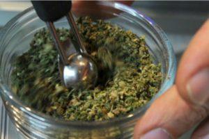 Dlaczego warto mieć cannabis w swojej diecie?, KonopiaLeczy.com