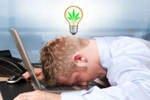 Cannabis wpływa na poprawę produktywności, KonopiaLeczy.com