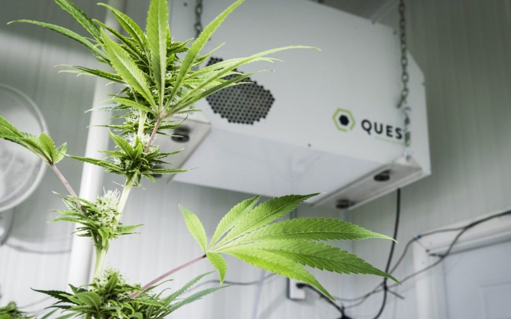 Pięciu najlepszych producentów cannabis, KonopiaLeczy.com