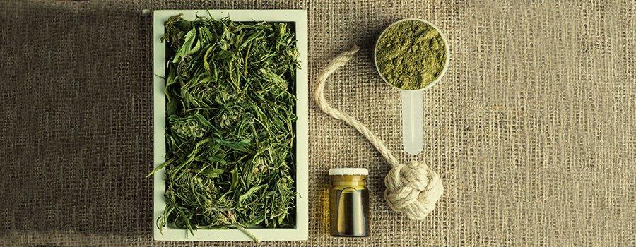 Herbata z CBD, KonopiaLeczy.com