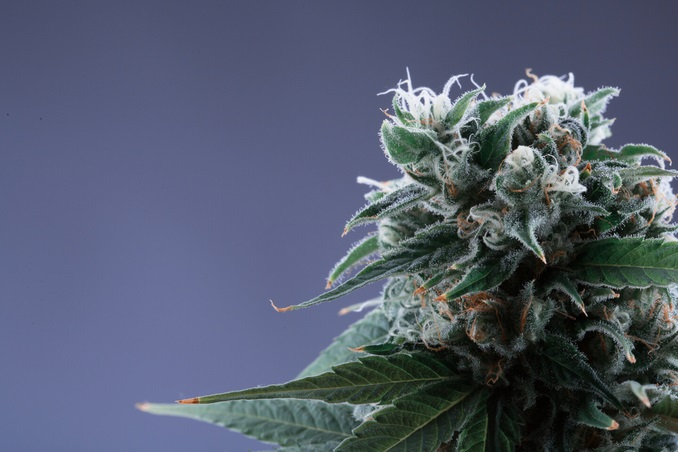 Marihuana lekarstwem na ból menstruacyjny, KonopiaLeczy.com