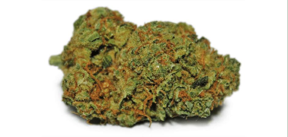New Jersey rozszerza program medycznej marihuany, KonopiaLeczy.com