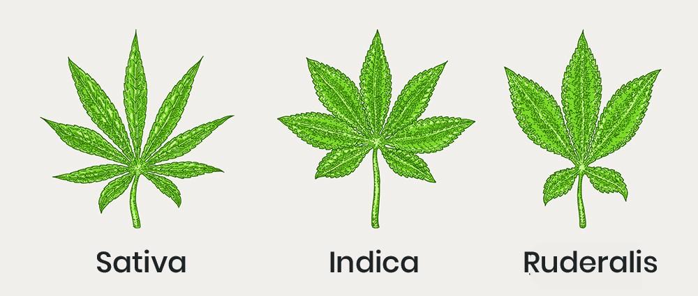Marihuana i stany lękowe, KonopiaLeczy.com