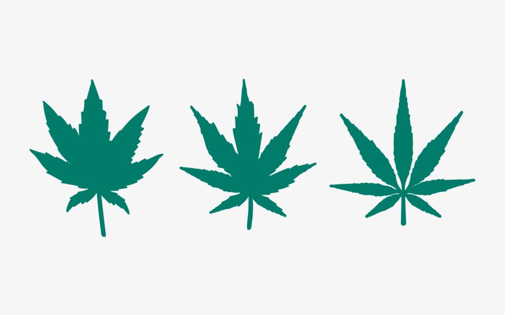 Wszystko, co Kanadyjczycy muszą wiedzieć o produktach z cannabis, KonopiaLeczy.com