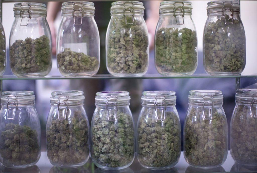 Legalny Przemysł Cannabis: Rekordowa Sprzedaż Marihuany, KonopiaLeczy.com