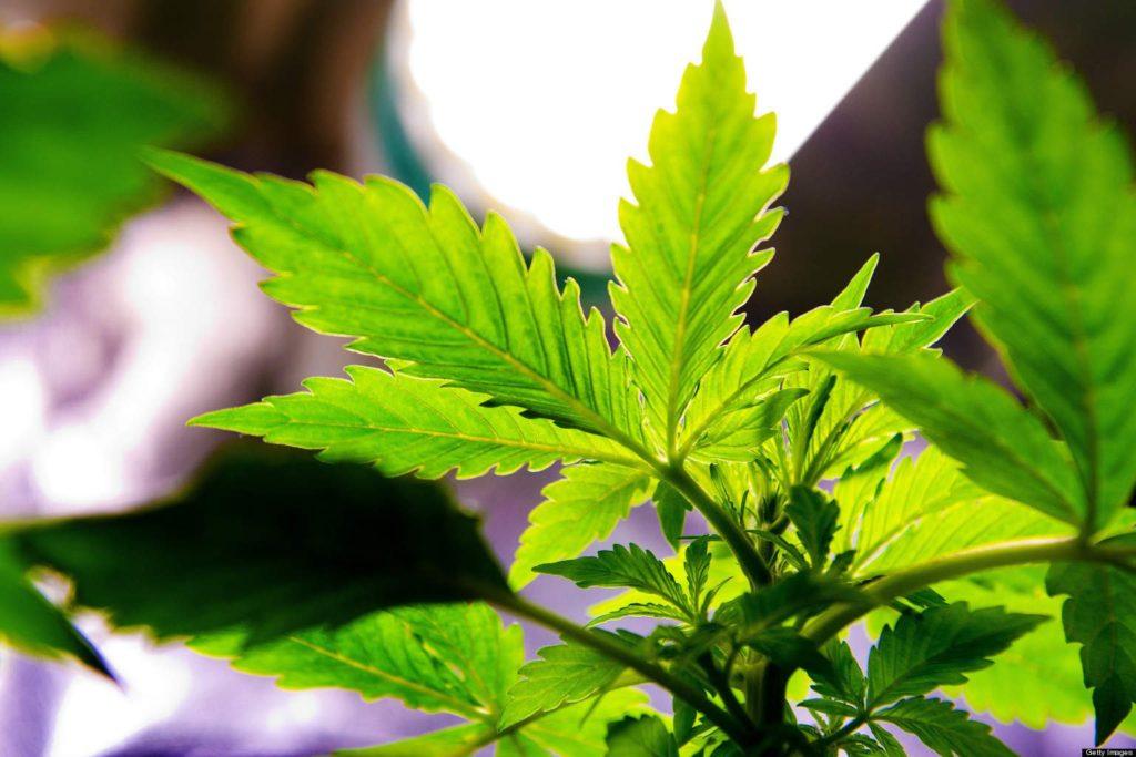 Marihuana Może Być Skuteczna w Leczeniu Objawów Zespołu Tourette, KonopiaLeczy.com