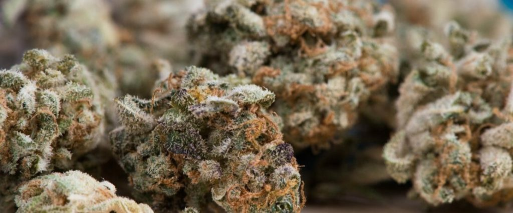 Marihuana vs Tradycyjne Leki na Migreny, KonopiaLeczy.com