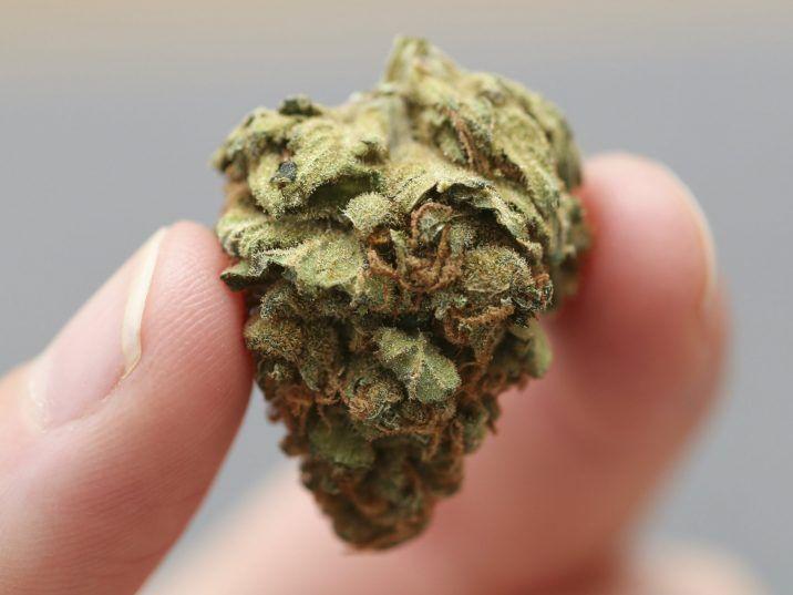 THC nie oddziałuje dobrze na COVID 19, KonopiaLeczy.com
