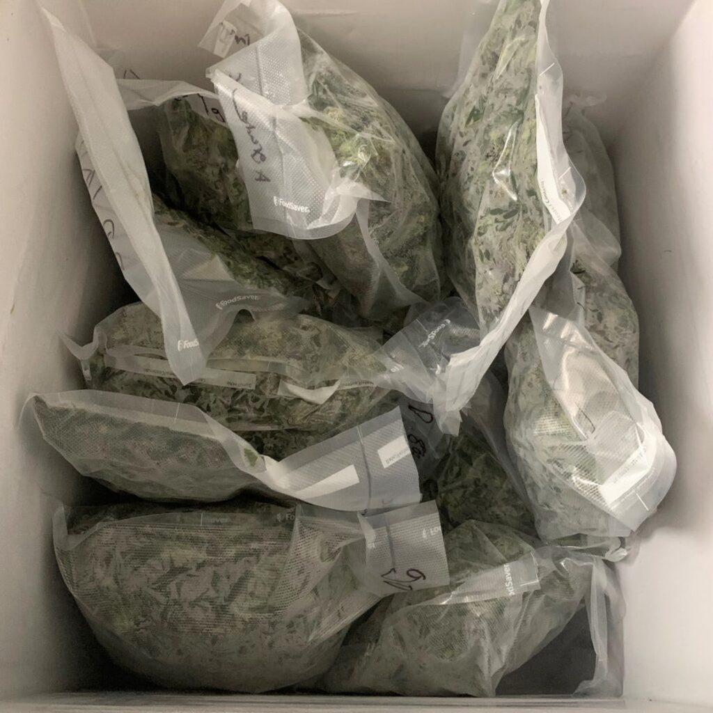 Pieniądze Powinny Być Ostatnim Powodem Legalizacji Marihuany, KonopiaLeczy.com