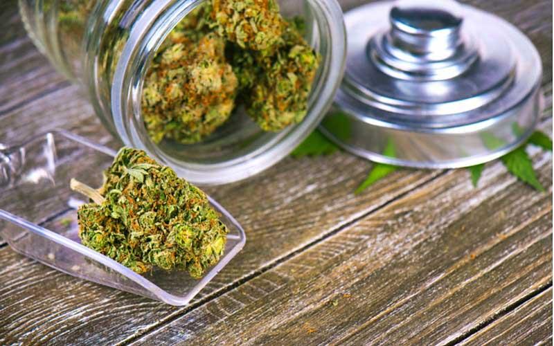 Sprzedaż Legalnej Marihuany Gwałtownie Wzrosła, KonopiaLeczy.com